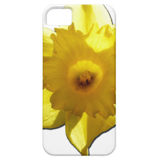 Yellow Trumpet Daffodil 1.0 iPhone 5 Case