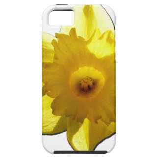 Yellow Trumpet Daffodil 1.0 iPhone 5 Covers