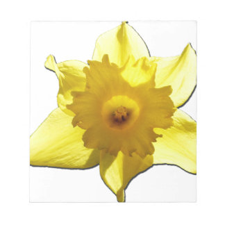 Yellow Trumpet Daffodil 1.0 Notepad