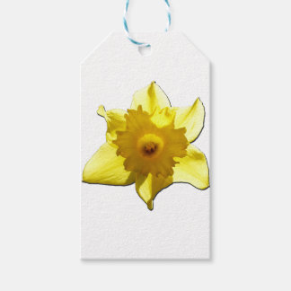 Yellow Trumpet Daffodil 1.0 Pack Of Gift Tags