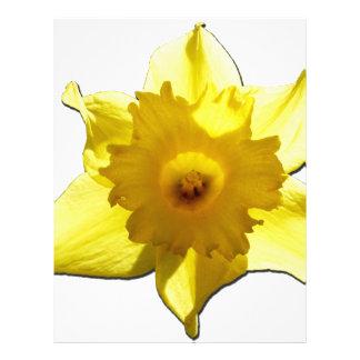 Yellow Trumpet Daffodil 1.0 Personalized Letterhead