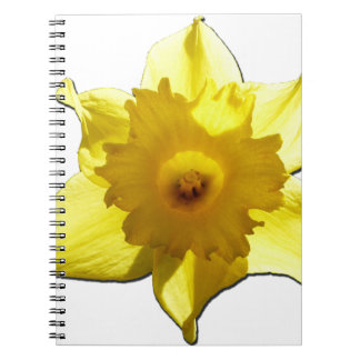 Yellow Trumpet Daffodil 1.0 Spiral Notebook