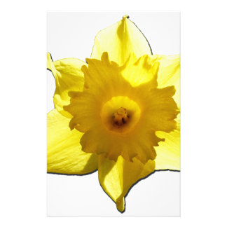 Yellow Trumpet Daffodil 1.0 Stationery