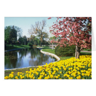yellow Tulip Festival, Fifth Avenue, Ottawa flower Card