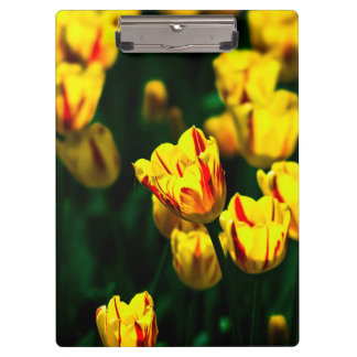 Yellow tulip flowers clipboards