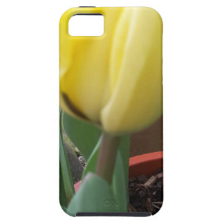 Yellow tulip iPhone 5 cover