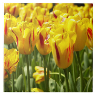 Yellow Tulips Floral Tile