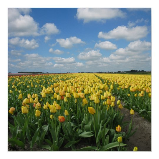 Yellow Tulips Landscape Poster