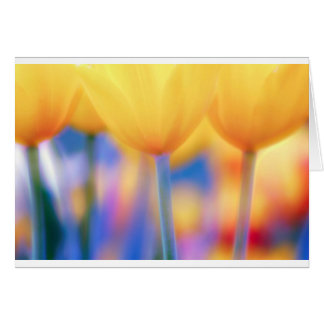 Yellow Tulips with Blue Card