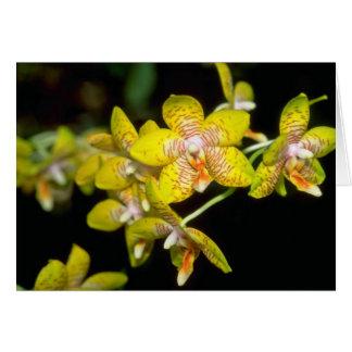 yellow Vanda flowers Card