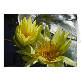 Yellow Water Lilies Card