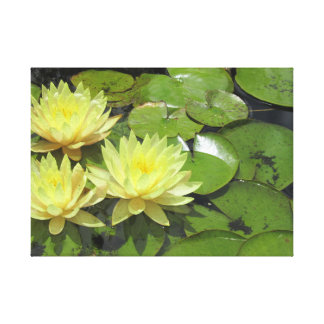 Yellow water lilies in pond canvas print