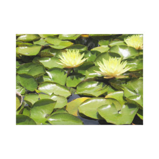 Yellow water lily in pond canvas print