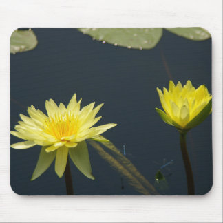 Yellow Waterlily and dragonflies mousepad