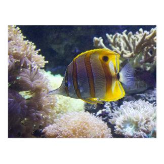 yellow & white Saltwater Copperband Butterflyfish Postcard