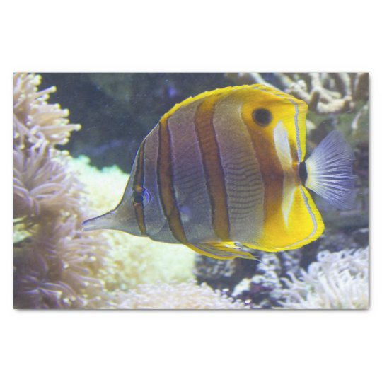 yellow & white Saltwater Copperband Butterflyfish Tissue Paper