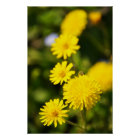 Yellow Wild Flower Photo Poster