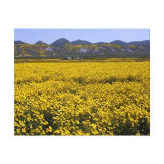 Yellow Wildflower Field Landscape Canvas Print