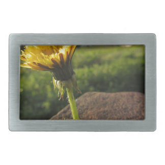 Yellow wildflower growing on stones at sunset belt buckle