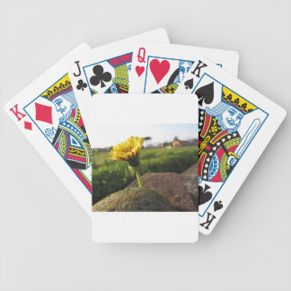 Yellow wildflower growing on stones at sunset bicycle playing cards