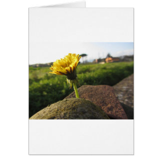 Yellow wildflower growing on stones at sunset card