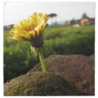 Yellow wildflower growing on stones at sunset napkin