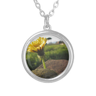 Yellow wildflower growing on stones at sunset silver plated necklace