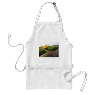 Yellow wildflower growing on stones at sunset standard apron