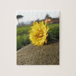 Yellow wildflower lying on a stone at sunset jigsaw puzzle