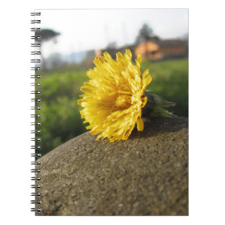 Yellow wildflower lying on a stone at sunset notebooks