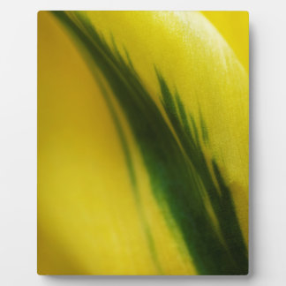 yellow wtih green strip tulip plaque
