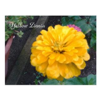 Yellow Zinnia Postcard