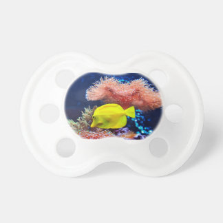 Yellownose Butterfly Fish Pacifiers