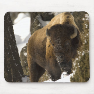 Yellowstone Bison Bull in Winter - Customized Mouse Pad