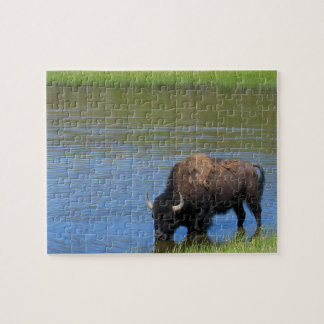 Yellowstone Bison Drinking in Lake Puzzle