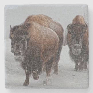 Yellowstone Bison Stone Beverage Coaster