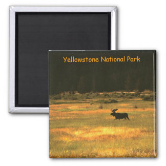 Yellowstone National Park Bull Moose Magnet
