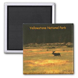 Yellowstone National Park Bull Moose Magnet