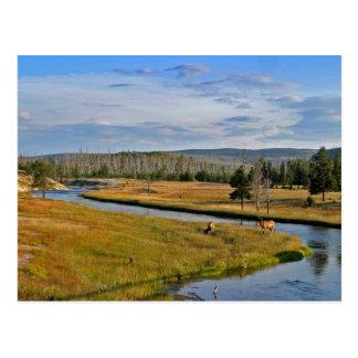 yellowstone national park, elk, postcard