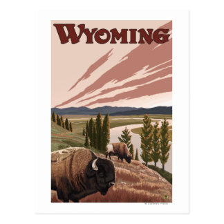 Yellowstone River Bison Vintage Travel Poster Postcard