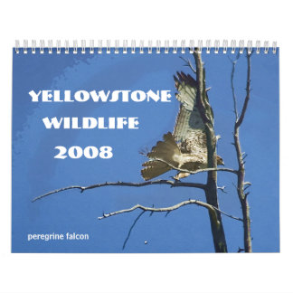 Yellowstone Wildlife 2008 Calendar