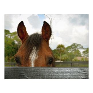 yeux au-dessus de tête de cheval de barrière prospectus en couleur
