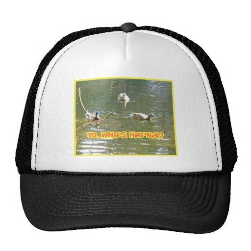 Yo, wha's hapnin? Tell the ducks. Mesh Hat