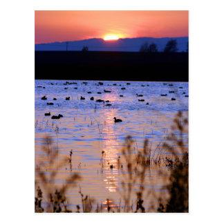 Yolo Wildlife Area Postcard