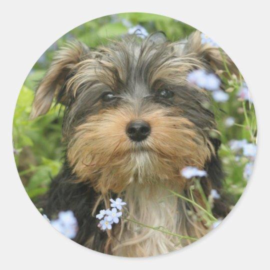 York Terrier Sticker