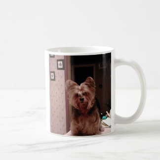 Yorkie Cup