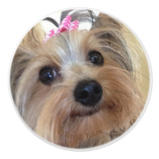 Yorkie Custom Ceramic Knob