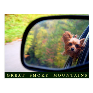 Yorkie Dog - Autumn Ride - Great Smoky Mountains Postcard