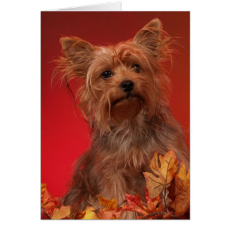 Yorkie Happy Thanksgiving Cards