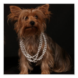 Yorkie in Pearls Poster